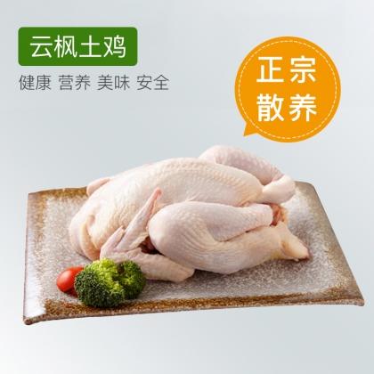 云枫有机生态土鸡