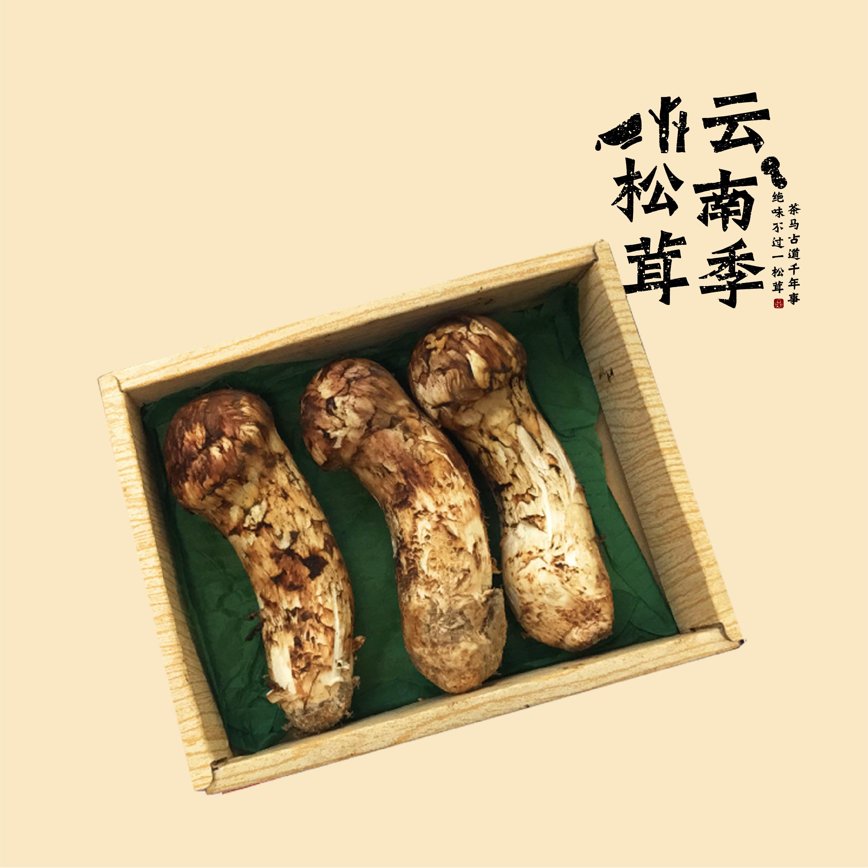 极品-森林之王(12-15cm)
