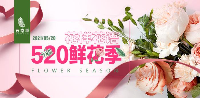 云南季·花样花语 520鲜花季