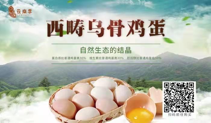 西畴乌骨鸡蛋——自然生态的结晶