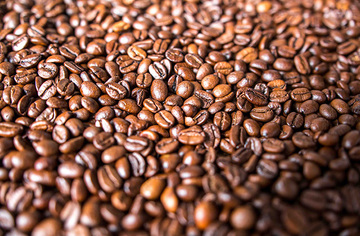 阿拉比卡咖啡(小粒咖啡)