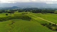 高黎贡山下的现代烟草农业样板