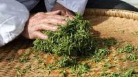 凤庆县举办茶叶加工和电商销售培训,提升茶产业工人技能