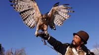人鹰之斗,古老的训鹰习俗