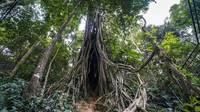美丽勐腊 共建生态文明